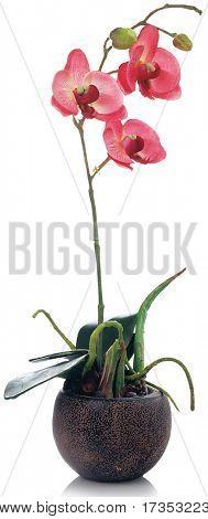 home flower
