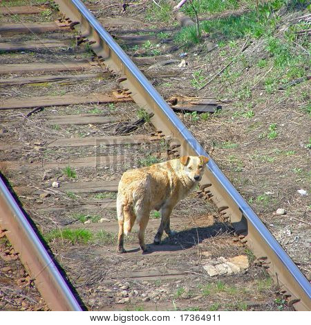lonely sad homeless abandoned red dog on tracks