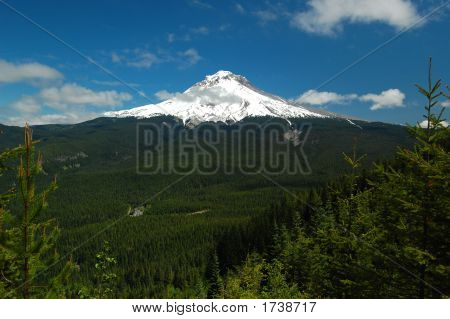 Mt. Hood And Forest