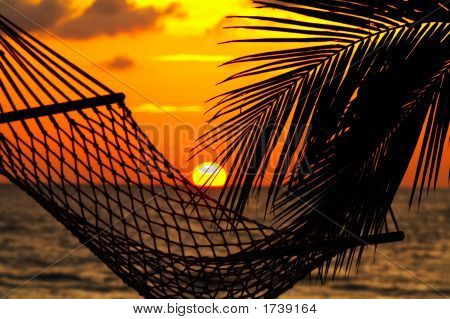 Palm Hammock And Sunset