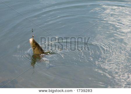 Fish On Lure