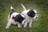stock photo of cute puppy  - A pair of 2 - JPG