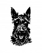 pic of scottie dog  - Scottie Dog  - JPG