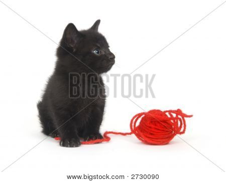 Black Kitten And Red Yarn