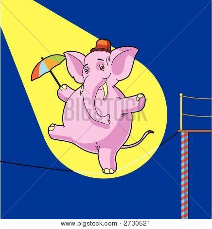 Elefant-Seiltänzer