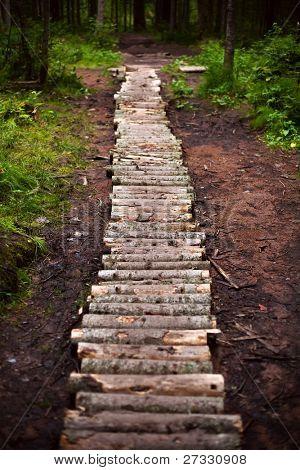 Winding forest wooden path walkway through wetlands