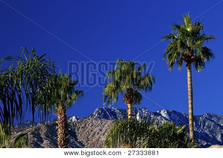 Fan Palms Trees Mountains Palm Springs California