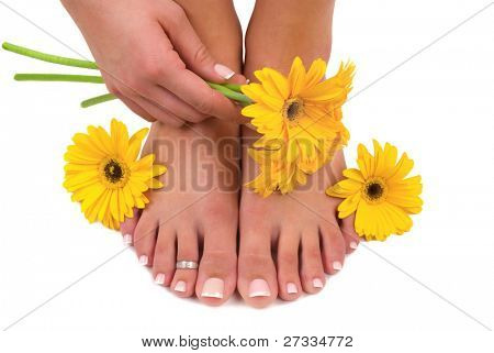 Pedicured feet, manicured hand and gerbera daisies