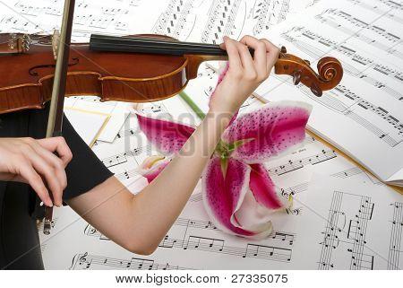 Notas musicais, tocando violino e lily flor