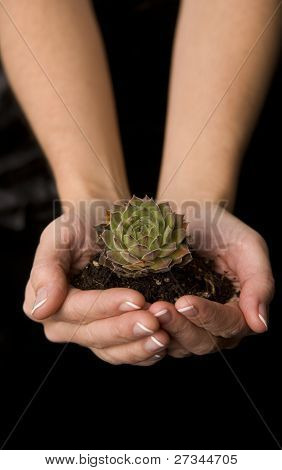 Plant In Her Hands