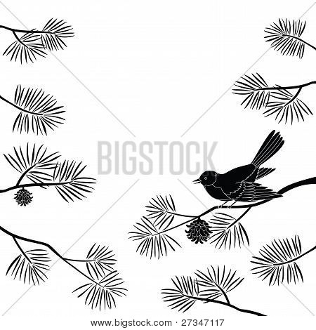 Titmouse on pine branch, cutout