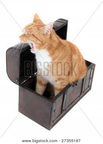 Tired Tomcat In Treasure Chest