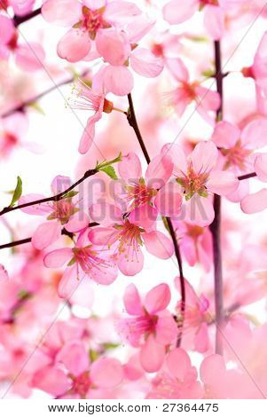 Beautiful Pink Flower Blossom on White