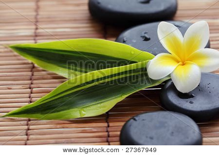 Spa still life with zen stones,frangipani flower and green leaves