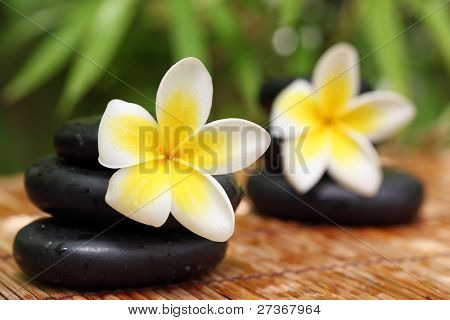 Spa still life with zen stones,frangipani flower,Shallow Dof.