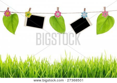 Blank photographs with leaf hanging over green grass