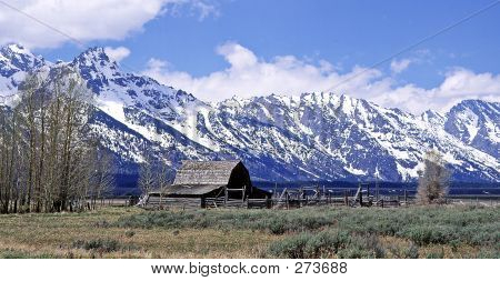 Grand Tetons And Barn