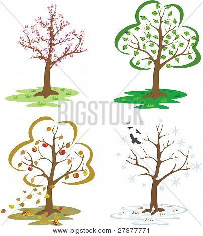 trees during the seasons of the year