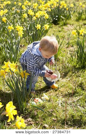 Young Boy On Easter Egg Hunt In Daffodil Field
