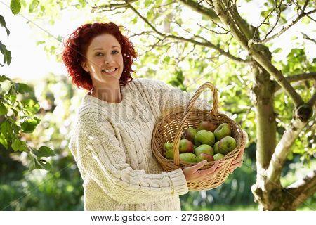 Woman picking apples in garden