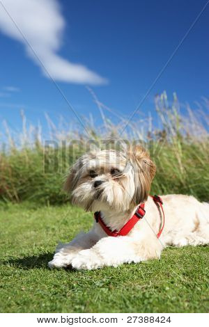 Small dog sitting on grass