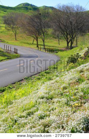 Scenic Road In Park