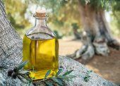 Bottle of olive oil under the olive tree. Blurred nature background. poster