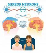 Mirror Neurons Vector Illustration. Medical Brain Action Explanation Scheme. Educational Diagram Wit poster