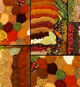 Healthy organic spices and herbs collage