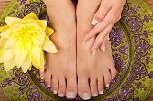 foto of pedicure  - Pedicure and manicure spa with beautiful flowers - JPG