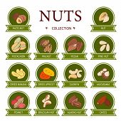 Set Of Ad-cards (banners, Tags, Package) With Hand Draw Nuts - Hazelnut, Almond, Pistachio, Pecan, C poster