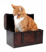 image of snoopy  - sweet pet in treasure chest on white - JPG