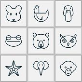 Zoology Icons Set With Mallard, Mouse, Sea Star And Other Duck Elements. Isolated Vector Illustratio poster