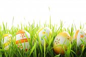 stock photo of easter-eggs  - Row of Easter eggs in Fresh Green Grass - JPG