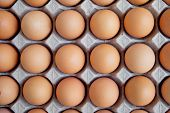 Many Fresh Raw Egg Chicken Lined Up In A Row. Flatlay Or Top View. poster
