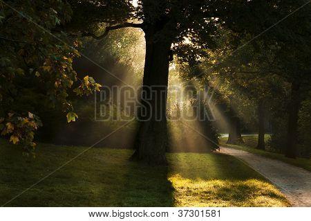 Sunbeams Through The Tree