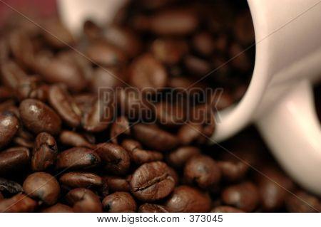 Coffee Beans #1