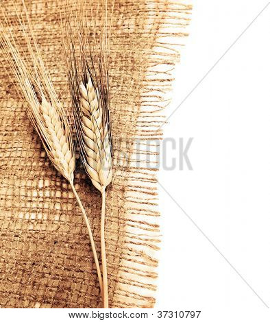 Wheat border over canvas background, harvest time, thanksgiving holiday decoration