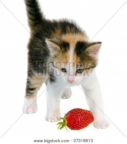 Tabby Kitten Cat Red Strawberry Isolated On White
