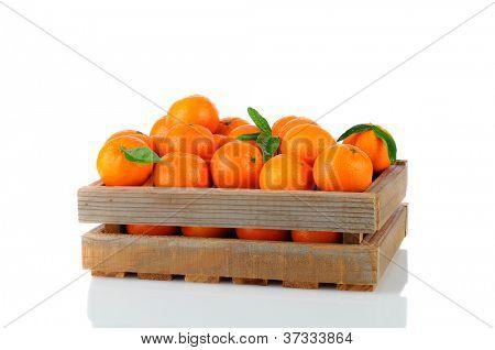 Eine Holz rustikal Kiste voll von Clementine Mandarinen. Querformat auf einem weißen Hintergrund-w