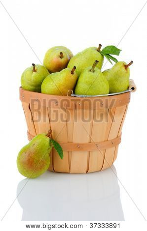 A basket full of fresh picked Bartlett Pears. Vertical format over a white background with reflection.