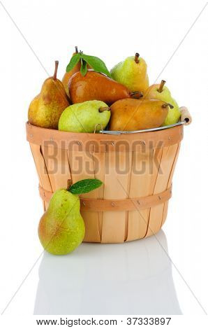 A basket full of fresh picked Bartlett and Bosc Pears. Vertical format over a white background with reflection.