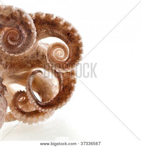 octopus border macro isolated on white background