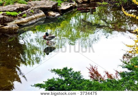 Pond In Zen Garden