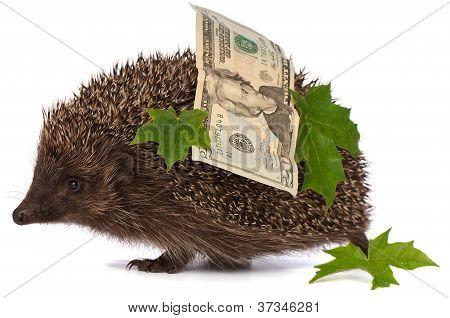 Igel mit Geld Gewinn