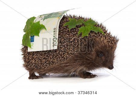 Igel mit Euro Gewinn