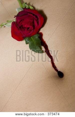 Bleeding Rose With Navel
