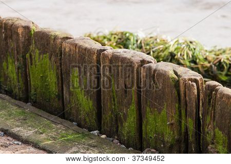 Old Wood Plank With Scum And Algae