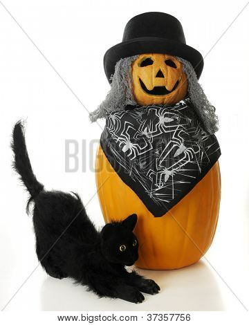 A Halloween cat by a 2-tier happy, ugly pumpkin man with stringy gray hair and a top hat.  On a white background.