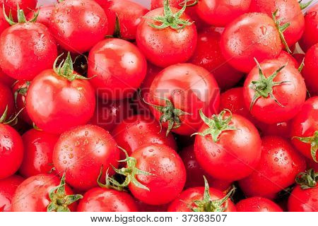 Multitude of ripe tomatoes